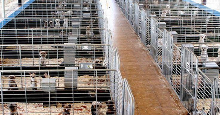 Prohibamos la venta de mascotas en las redes sociales! FIRMA Y COMPARTE ESTA PETICIÓN AHORA!