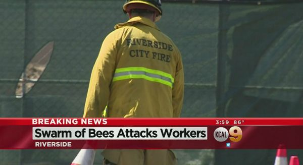 THE BIGGEST WORLD COMMUNITY OF ENTREPRENEURS!!!: Construction worker dies after bee swarm attack in...