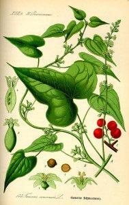 Untul Pământului – Remediu Pentru Reumatism, Sinuzită, Bronșită, Pneumonie