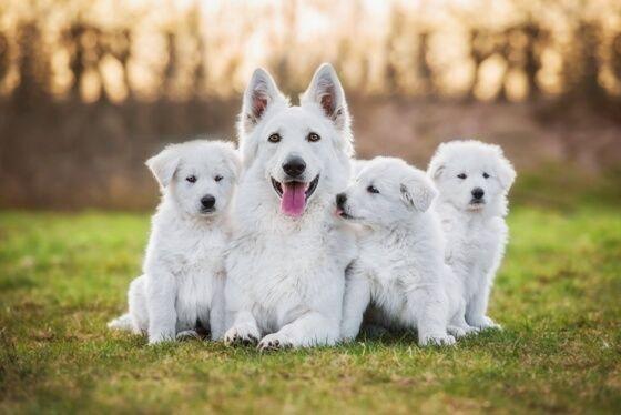 Schonkost Hund-bei welchem Problem ist was das Beste? Wieso ist Hüttenkäse so wichtig? Was kann Hüttenkäse noch- auch Mundgeruch stoppen+ Zähne putzen?