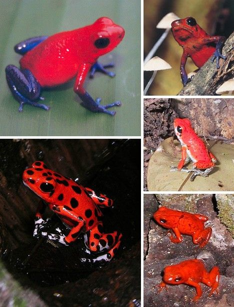 Well Red: 10 Amazing Red Animals | WebEcoist