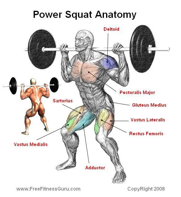 power squat anatomy