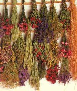 Secagem de flores e folhas