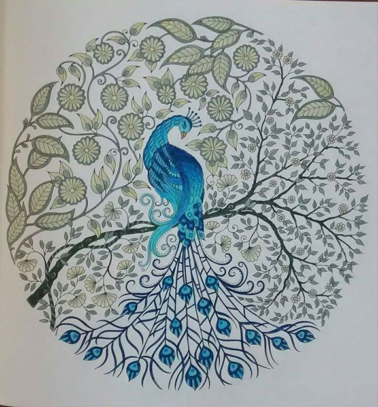72 Best Images About Coloring Peacock On Pinterest