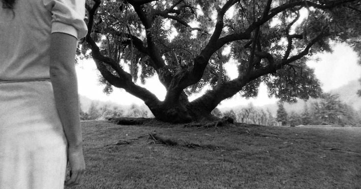 Frente al árbol   (reedición 2011)