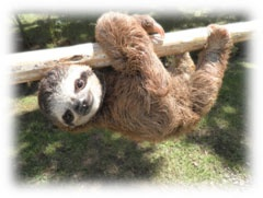 """""""adopt"""" a sloth!   or give to other rescue organizations! i'm totally going to donate once i get some extra $$"""