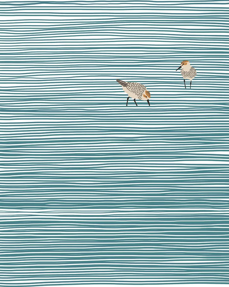 sandpipers at crissy field estuary.
