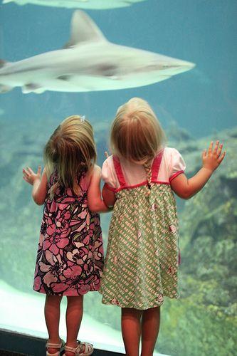 NC Aquarium in Outer Banks