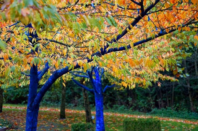Artist Graffitis Trees Blue to Raise Awareness About Deforestation