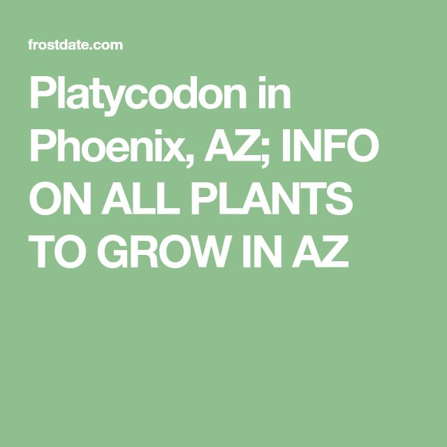 Platycodon in Phoenix, AZ; INFO ON ALL PLANTS TO GROW IN AZ