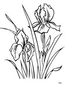 238 best line drawings of irises images on pinterest for Iris flower coloring page
