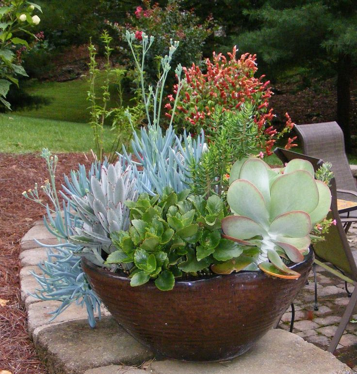 1000 images about outdoor potted plants on pinterest for Fine gardens landscaping