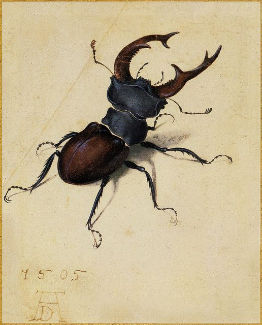 Albrecht Dürer 'Stag Beetle' 1505 Watercolor and bodycolor by Plum leaves, via Flickr