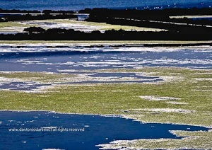 Water carpets my-shop-place-wildlife-landscapes-collection
