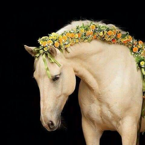 ...and she braided flowers in her horse's mane.
