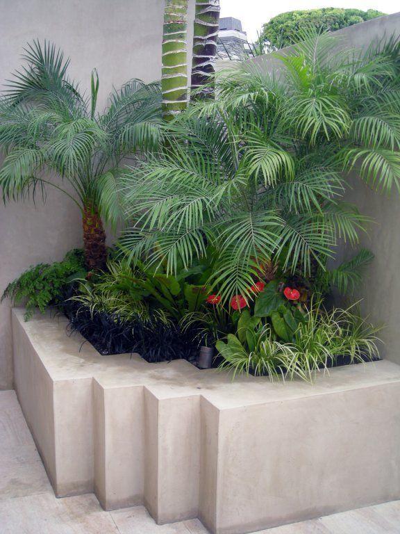 Kaufen Sie Palmen Echte Palmen Im Palm Tree Store Realpalmtrees Buypal Buypal Echte Kaufen W Tropical Garden Herb Garden Kit Planting Flowers