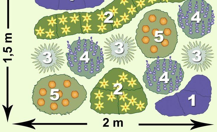 1 Salbei 'Blauhügel' (Salvia nemorosa, 6x), 2 Mädchenauge 'Moonbeam' (9x), 3 Kleines Präriegras (Schizachyrium, 3x), 4 Blauraute 'Blue Spire' (Perovskia, 3x), 5 Sonnenauge 'Asahi' (Heliopsis scabra, 2x)