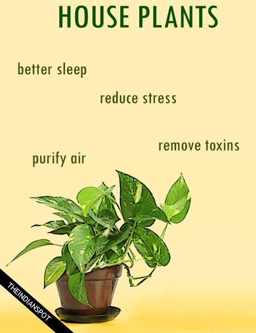 Amazing Health Benefits Of House Plants Health Benefits