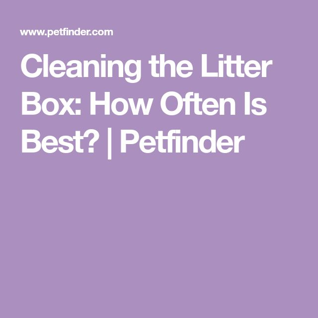 Cleaning the Litter Box: How Often Is Best?   Petfinder
