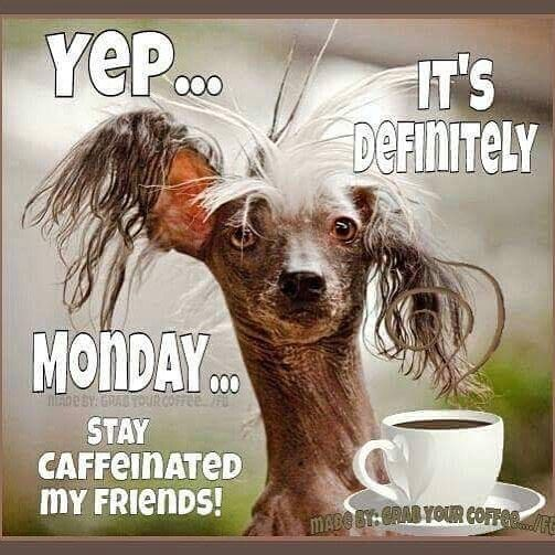Funny Monday Quotes: The 25+ Best Monday Coffee Ideas On Pinterest