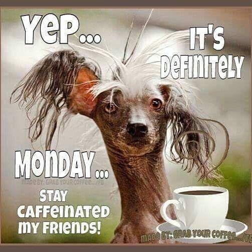 Happy Monday Meme Funny : Best mondays suck images on pinterest thoughts i