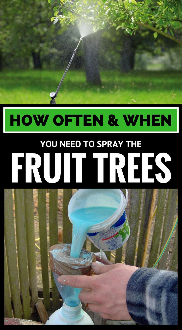 best 25 growing apple trees ideas on pinterest apple tree