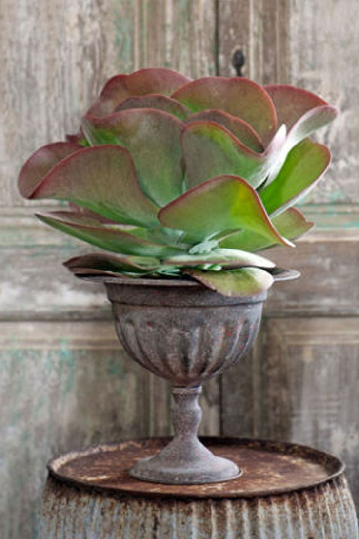 Paddle Plant  - CountryLiving.com
