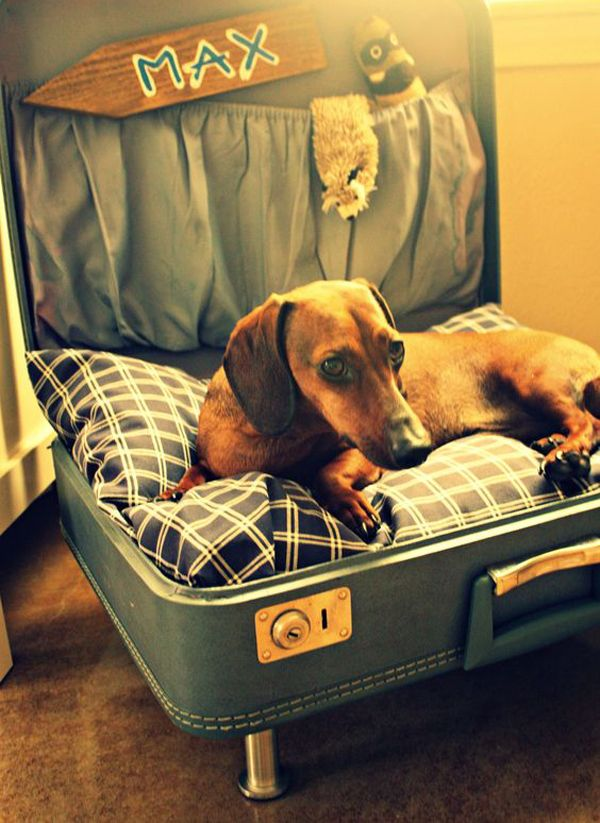 45 Cool And Modern Diy Dog Bed Ideas Home Design And Interior Diy Dog Bed Cool Dog Beds Diy Dog Stuff