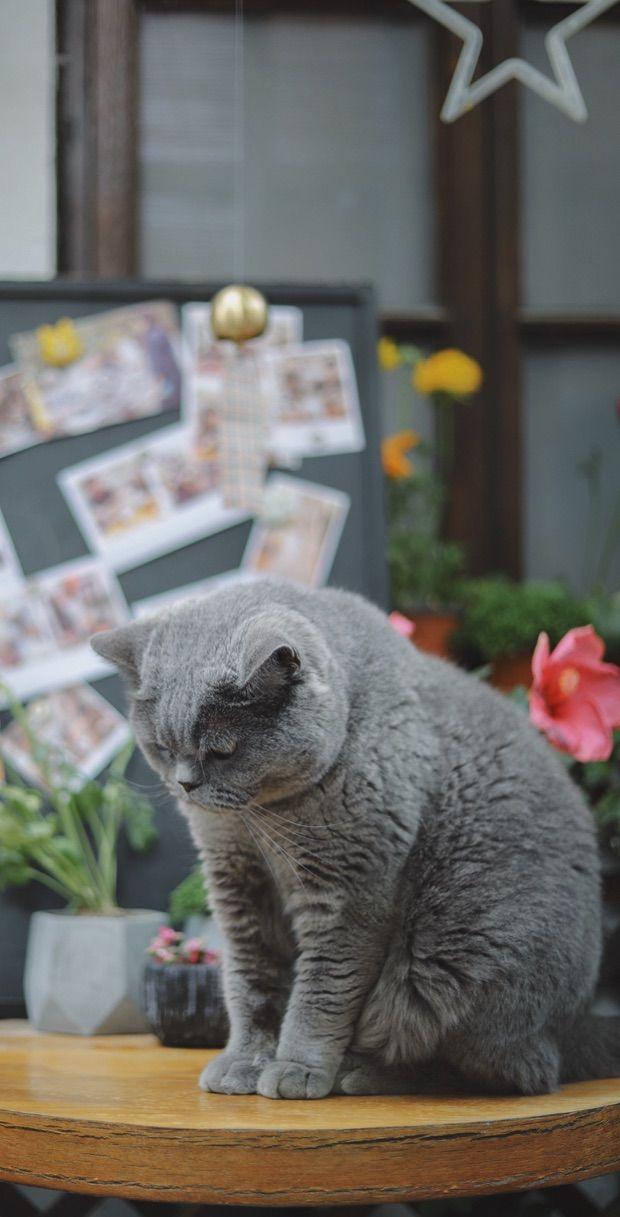 Cute Cat Wallpaper Iphone Collection Cute Cat Wallpaper Cat Wallpaper Cat Spray