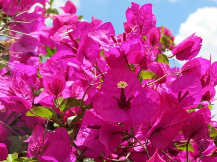 Flor de marzo