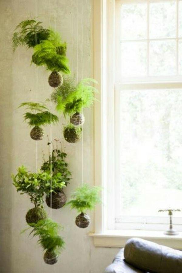Hängende Zimmerpflanzen und Balkonpflanzen – umweltgerechtes Haus