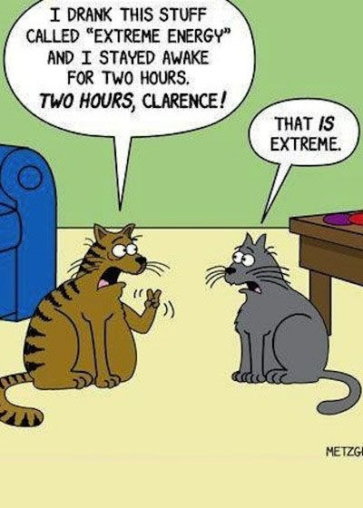 cat jokes | Hilarious Cartoon Joke - two hours, really?!