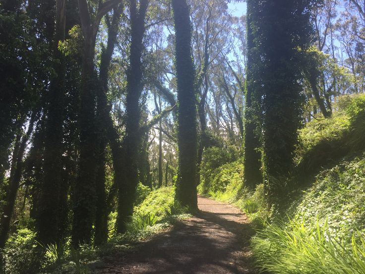 Sausalito ca summer green