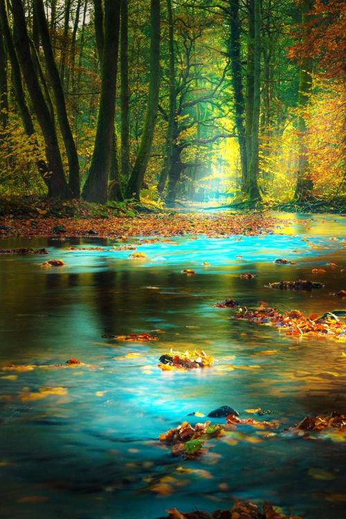 fall-stream-forest