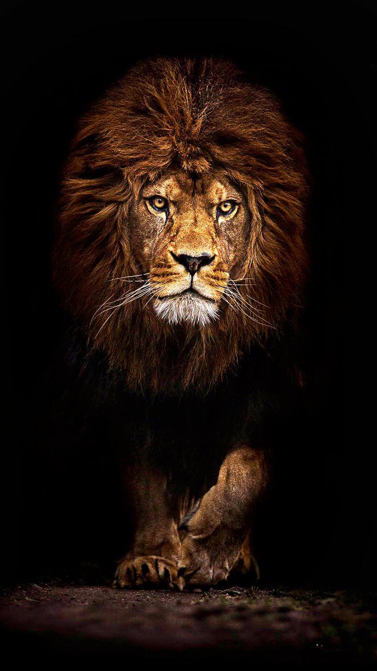 Pin em Tigers