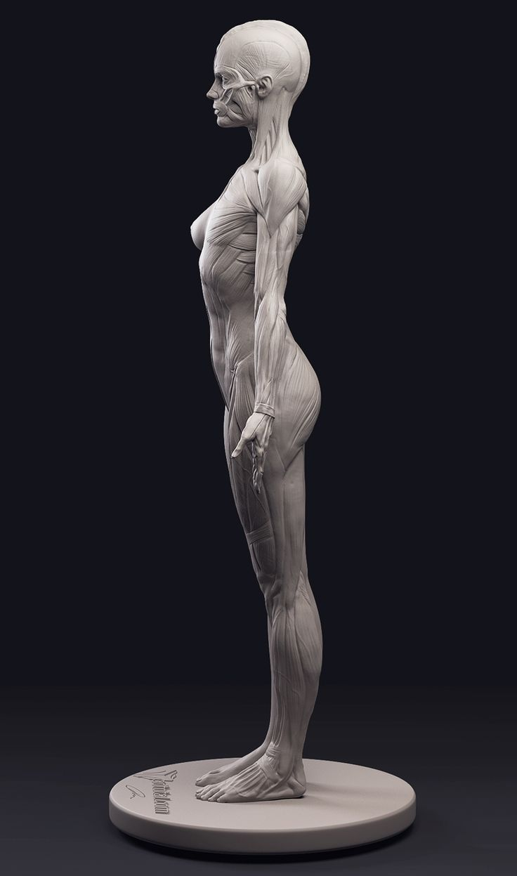 37 best Human Anatomy for Artists images on Pinterest | Human ...