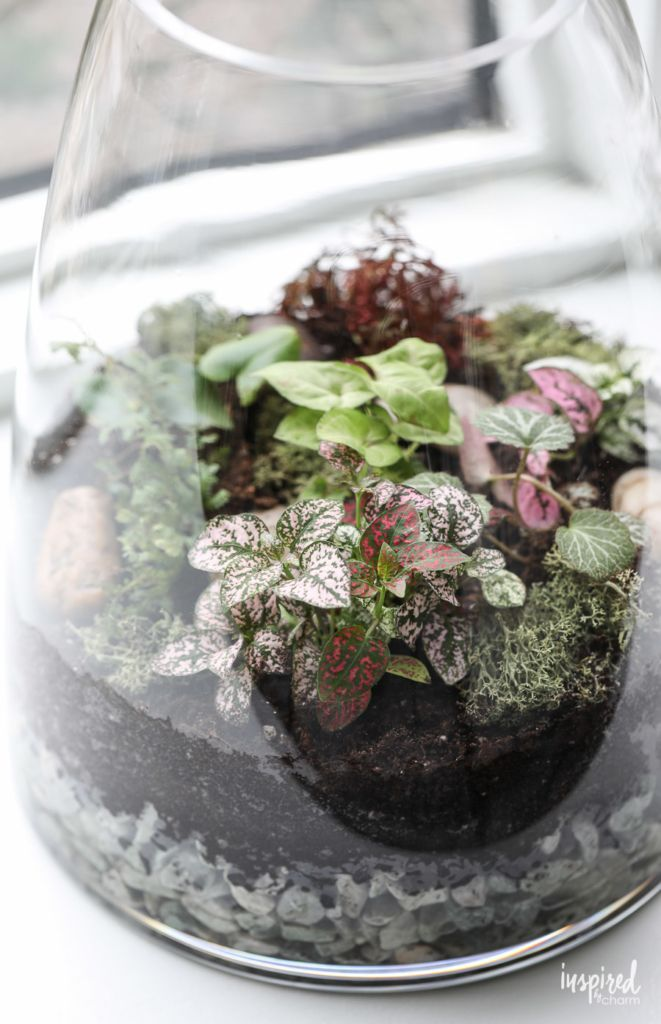 Learn How To Make A Terrarium Terrarium Plants Diy Garden
