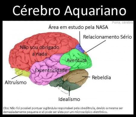 signo_cerebro11