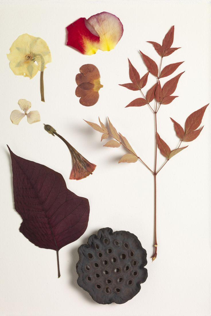 Herbarium - ph Massimo Gardone