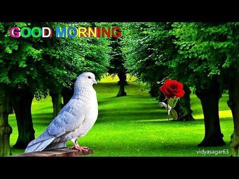 GOOD MORNING video -Whatsapp - YouTube