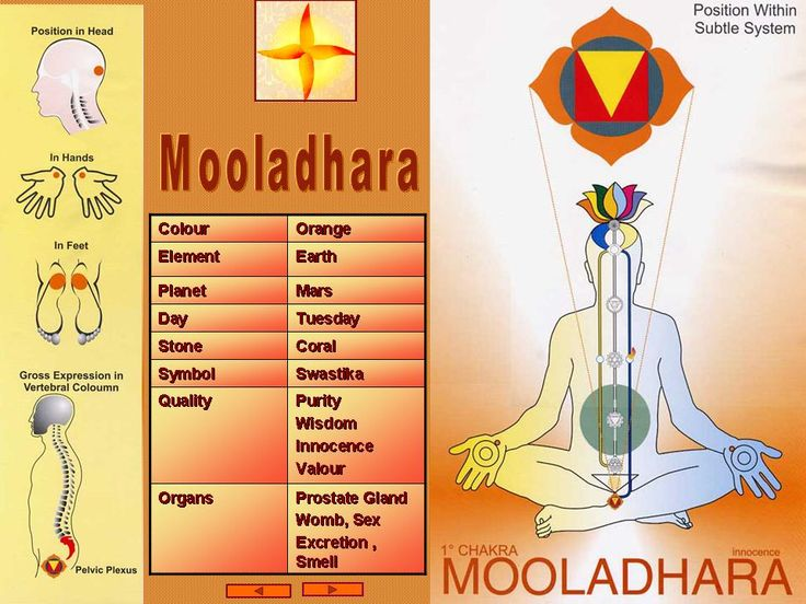The elements of Mooladhara and position in the body.