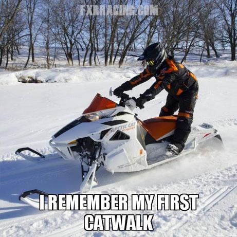 Cats suck Arctic