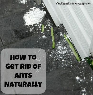 1073 best bugs around your house or backyard here is help for How to get rid of household items