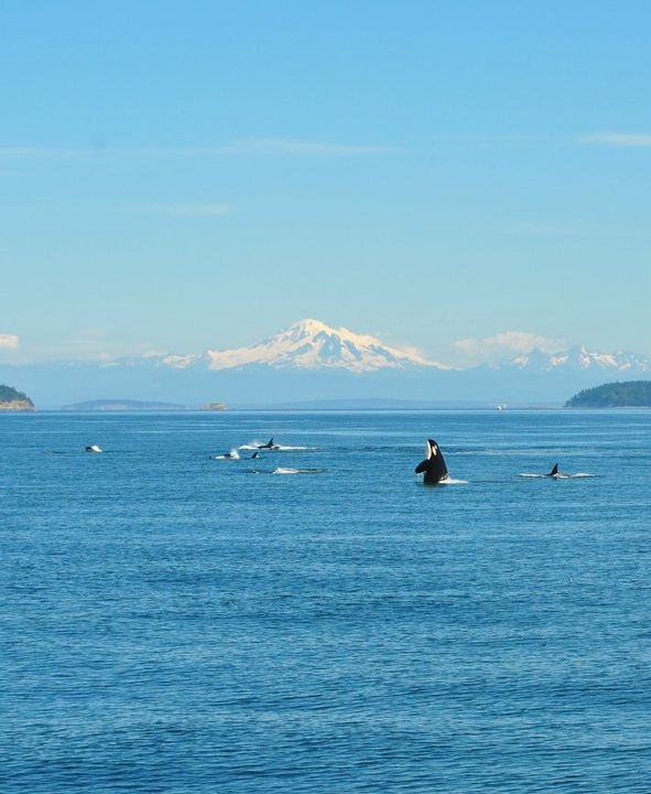 Language In 45 And 47 Stella Street: 35 Best Images About Orcas Island On Pinterest