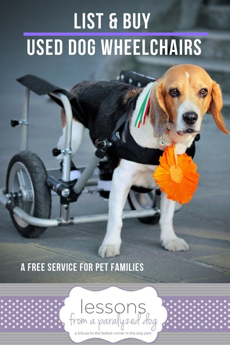 Try Our Free Used Dog Wheelchair Classified Ad Page Dog