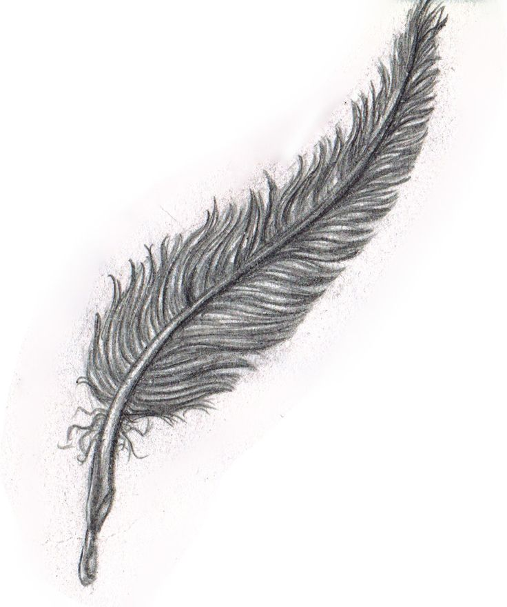 Pencil Sketch Black Feather By Yako On Deviantart Feather Drawing Black Feathers Pencil Sketch