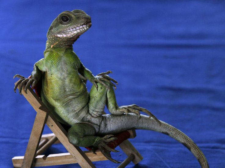 Xbox Live And PlayStation Network Are Still Down, And The Hacker Gang 'Lizard Squad' Is Loving It (MSFT, SNE)