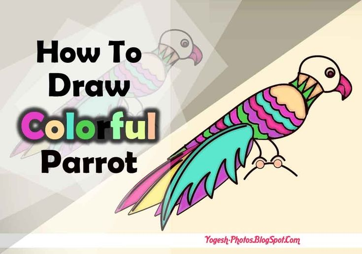 How To Draw Parrot In Photoshop [Speed Art]