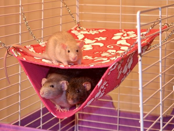 #‎Hammock‬ for the pocket ‪#‎pets‬. Take a look at 10 pet hammock ideas at: http://impressivemagazine.com/2013/07/23/10-pet-hammock-ideas/#more-12217