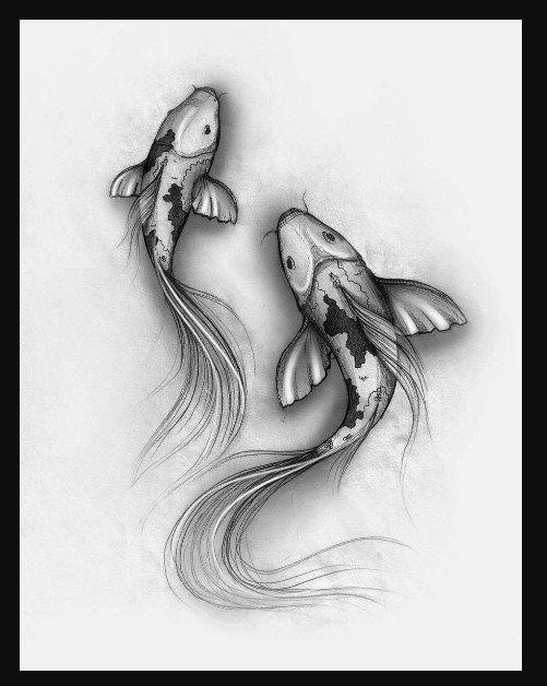 Gambar Sketsa Ikan Koi Frame Koi Fish Drawing Fish Drawings